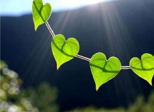 Hojas de amor